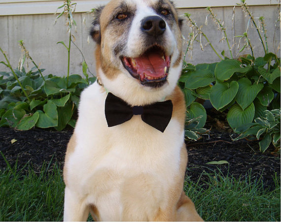 Mariage - Dog Bowties Bow Tie doggie bowtie slider BLACK TIE FORMAL Pet Clothing tux ring bearer outfit party wedding attendant photo prop