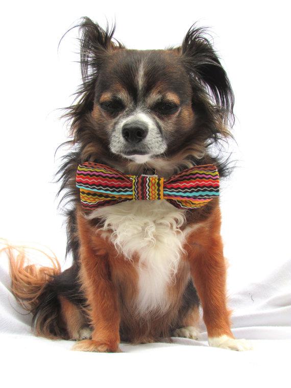 زفاف - Dog Bowtie- 1970s Retro Stripe print-Clip on Pet bowtie