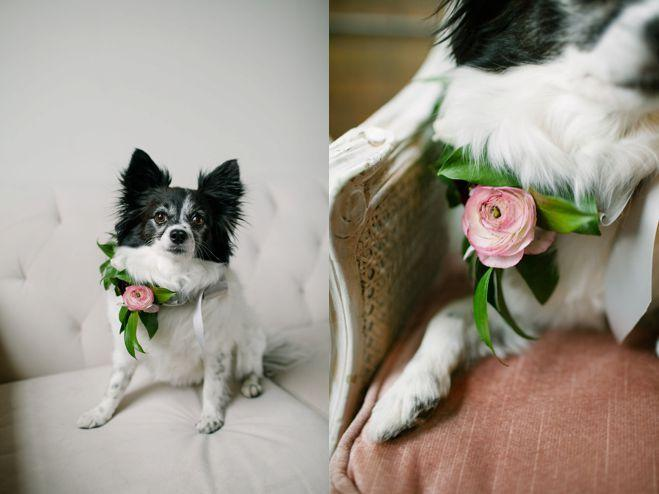 Свадьба - (Dogs At Weddings)