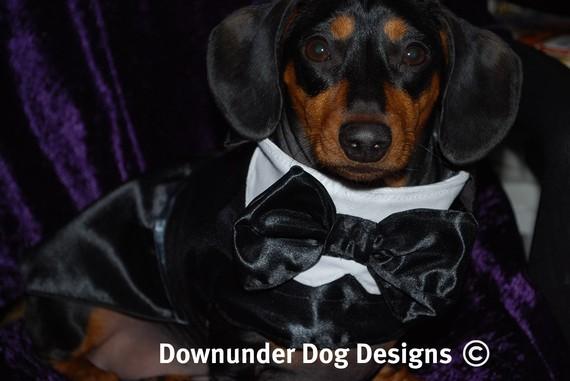 Свадьба - Dog Tux coat 2 piece