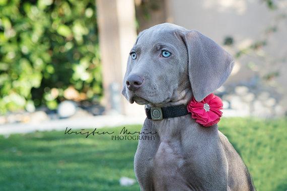 Свадьба - Dog Collar Flowers, Set of Three (3) - Dog Collar Flower - Dog Collar Accessories - Flower Dog Collar - Wedding Dog Collar -Set - Dog bows