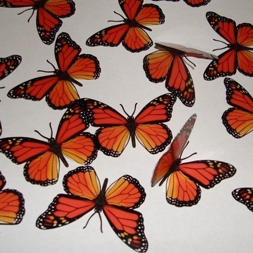 Свадьба - 15x 3D MONARCH Natural BUTTERFLIES Wall Decor Decal Scrapbooking Die Cuts Craft Butterfly Decoration Orange