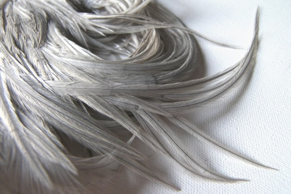 Mariage - SILVERY GRAY Feathers 3-5 Inches Long, 10 Pcs