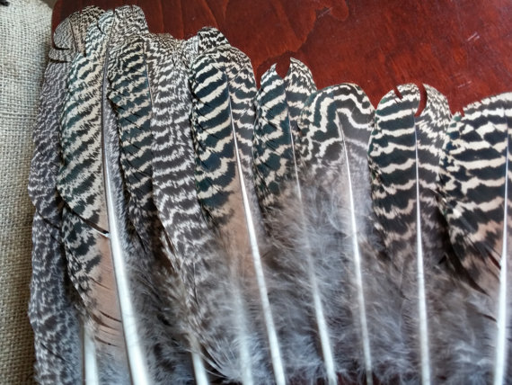 زفاف - Peacock Feathers, 9 Striped Smudge Feathers, 1.5in Wide and 5 to 14in length, Naturally Shed, Craft feathers,Center pieces, Corsage, Bouquet