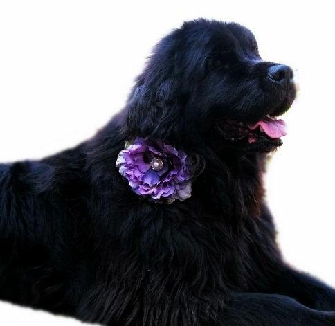 Свадьба - Satin Wedding Dog Collar with Flower Accessory - Eggplant