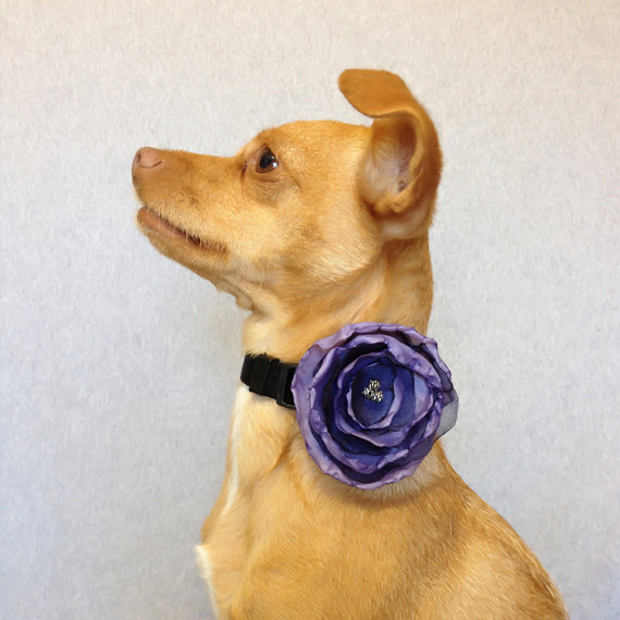 Wedding - Lavender and Navy Blue Satin Flower for a Dog or Cat