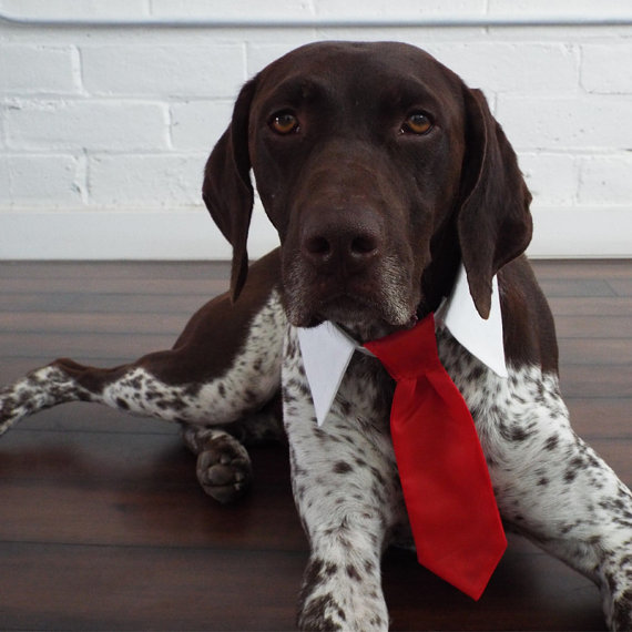 Wedding - Red Tie for Cats and Dogs - Preppy Pup Couture