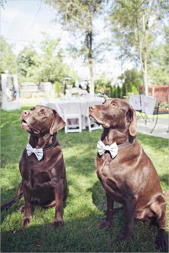 Mariage - Puppy LOVE