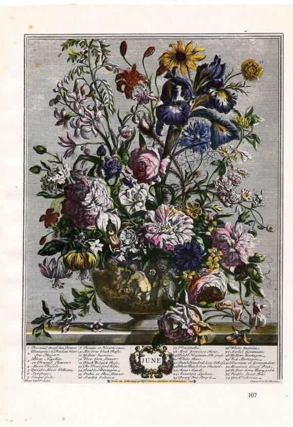 Hochzeit - June Botanical Illustration Art Print- Furber 12 Months of Flowers Bouquet-18thc Floral Arrangement baby birth wedding anniversary gift idea