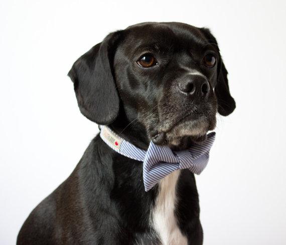 Свадьба - Blue Seersucker Bowtie Dog Collar