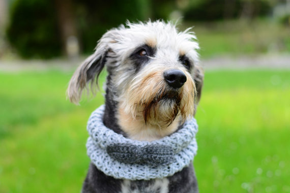 Mariage - Dog grey neckwarmer with bow, hand crocheted, pet accessories, clothing, ellegant pet