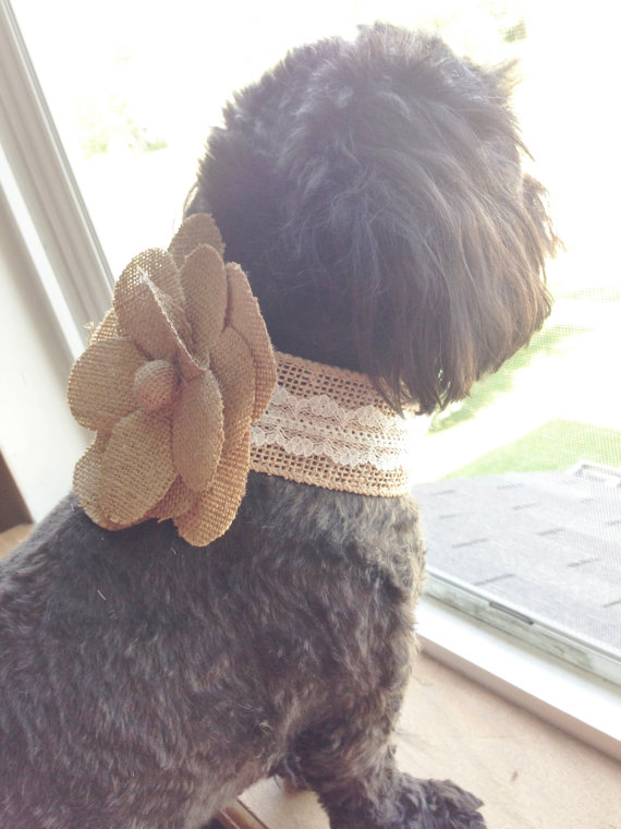 Свадьба - WEDDING FLOWER COLLAR - Rustic Burlap & lace Flower Dog collar,Pet Wedding,Ties on, Dog Wedding, Pet Corsage, Dog flower , Dog Bow