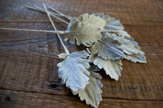 Mariage - Dusty Miller for Bouquets and Arrangements