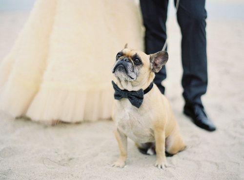 Wedding - Dags