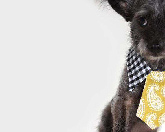 Свадьба - Dog tie and shirt collar- Mustard print and gingham