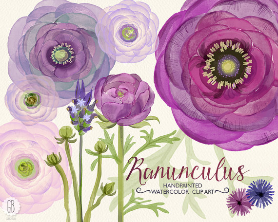 Wedding - Watercolor purple lavender ranunculus flowers, hand painted, bouquet florals, clip art, wedding invitation, buttercups, party stationery