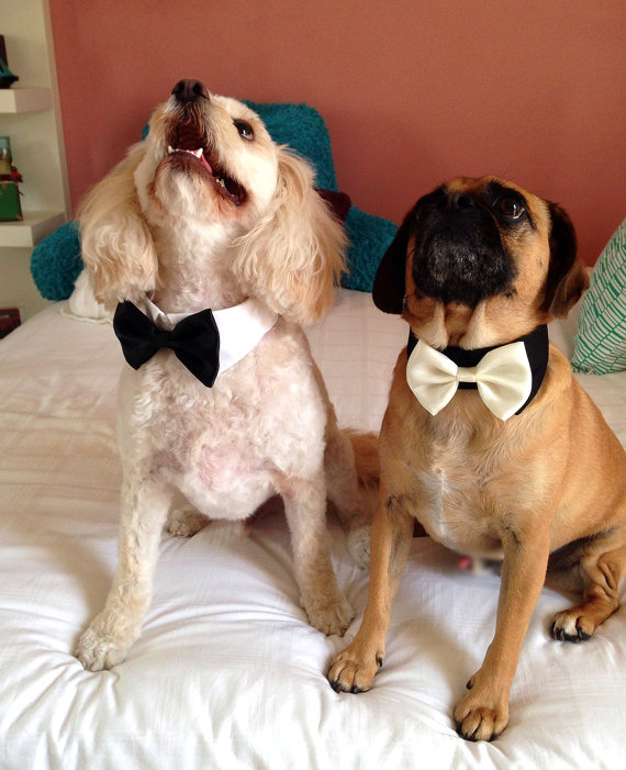 Свадьба - More Colors Available- Dog bow tie collar, dog tuxedo collar, dog bowtie, dog formal collar, pet bow tie, pet / dog wedding bow tie