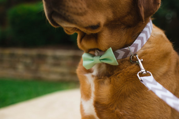 Mariage - Wedding Bowtie Dog Collar, Wedding Dog Collar, Wedding Dog Leash, Bowtie Dog Collar, Collar and Leash Set, Best Dog Collar, Groomsman collar