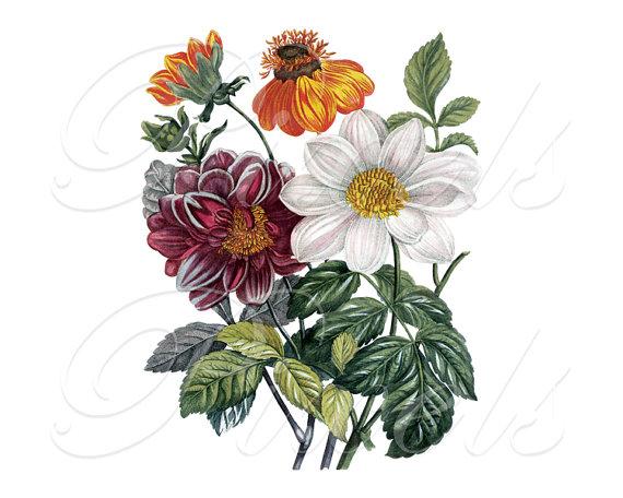 Mariage - CLEMATIS bouquet, Instant Download, floral wedding clipart, antique botanical illustration no.403