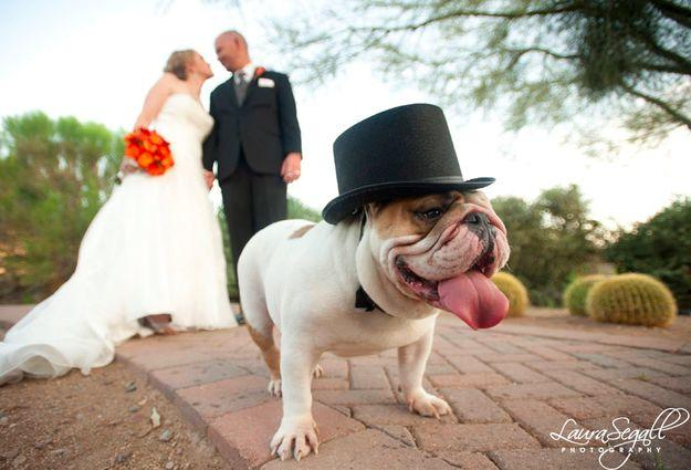 Свадьба - 21 Impossibly Adorable Wedding Day Dogs