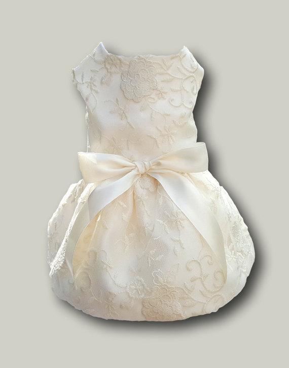 زفاف - Dog Wedding Dress, Ivory and Bridal Lace