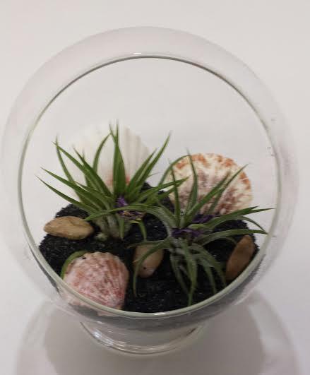 Свадьба - Air Plant Glass Pedestal Terrarium DIY Complete Kit with Two Air Plants, Sand, Shells and Stones.