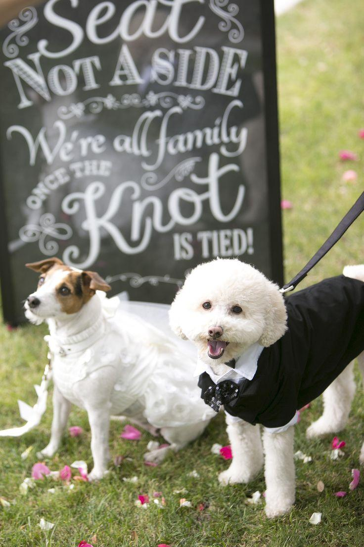 Свадьба - Wedding Animals