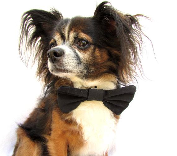 Свадьба - Dog Bowtie-Black clip on bow tie