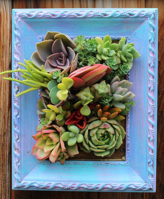 زفاف - Picture Framed Succulent Vertical Garden Ready to Ship