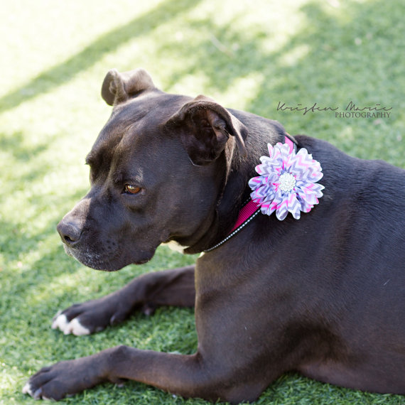 Mariage - Dog collar flowers. pink and gray chevron, pets, dog collar, dog collar bling, collar Flowers, Wedding Dog Flowers, Bows for Dogs, Dog Bows