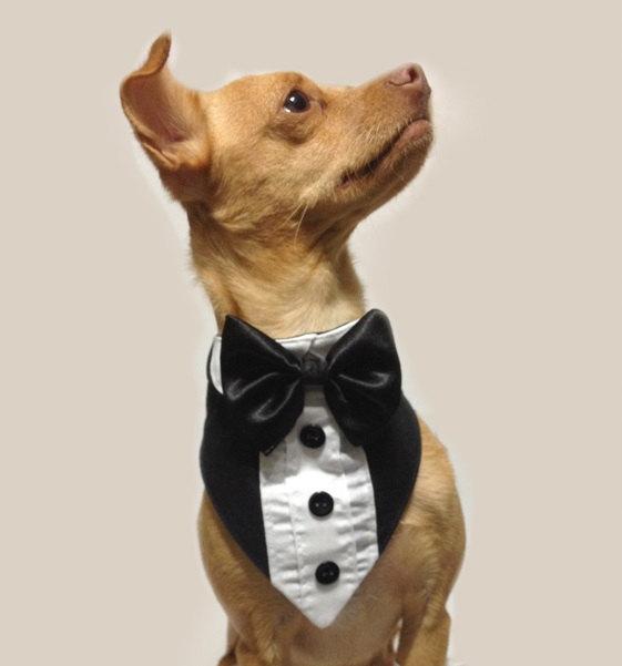 Mariage - Pet Tuxedo in Black and White