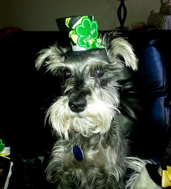 Свадьба - Dog Top Hat, Pet Top Hat, St patricks, Team, Christmas, Wedding, Easter, Thanksgiving, Birthday