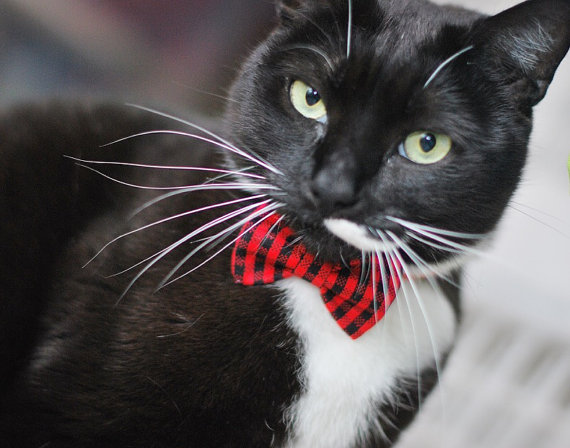 Свадьба - Red and Black Plaid Bow Tie, Clip, Headband or Pet