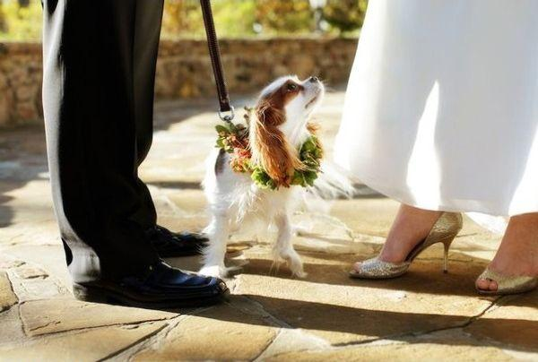 "Свадьба - ""Man's Best Friends"" - Gorgeous 'Dog In Wedding' Pictures From Elizabeth Anne Designs"