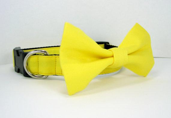 زفاف - Wedding dog collar-Yellow Dog Collar with bow tie set  (Mini,X-Small,Small,Medium ,Large or X-Large Size)- Adjustable