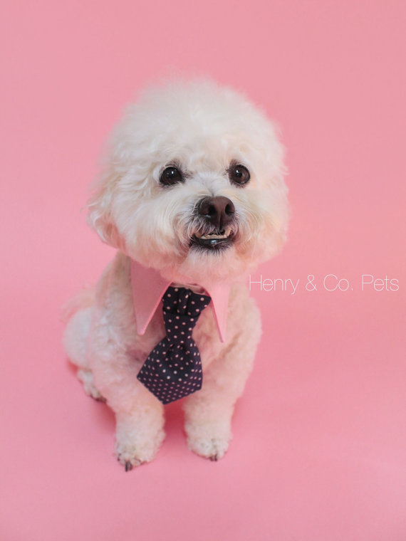 Свадьба - Dog tie and shirt collar-  navy blue polka dot tie- pink collar- wedding- dog clothing- formal wear for dogs
