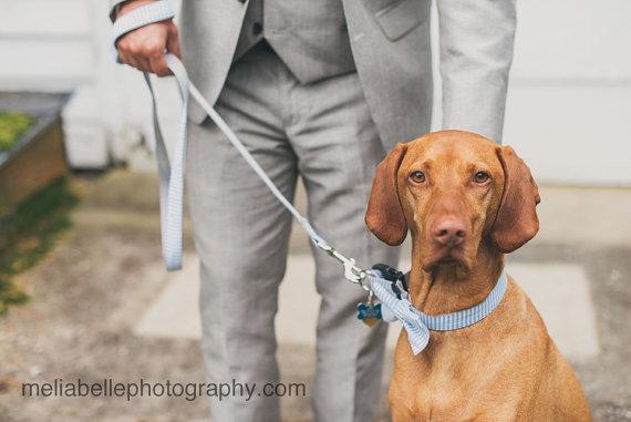 زفاف - Blue and White Seersucker Bow Tie For Dog Collar with Optional Leash