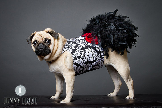 Свадьба - Black Damask Feather Harness Dog Dress