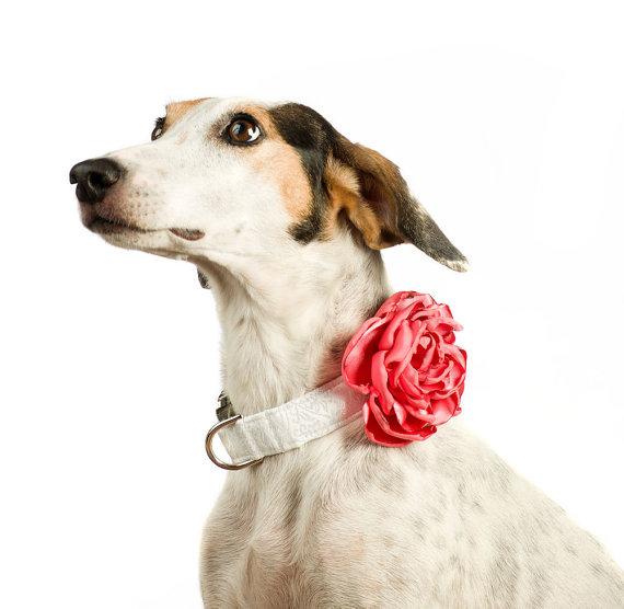 Свадьба - Wedding Dog Collar Flower - Coral Satin