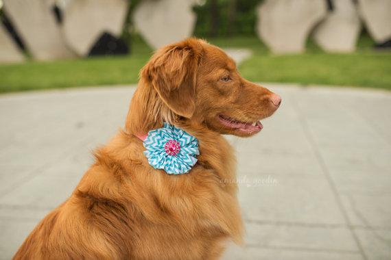 Свадьба - Dog collar flowers. Blue and pink, Blue chevron, pet, dog collar, dog collar bling, collar Flower, Wedding Dog Flower, Bows for Dog, Dog Bow