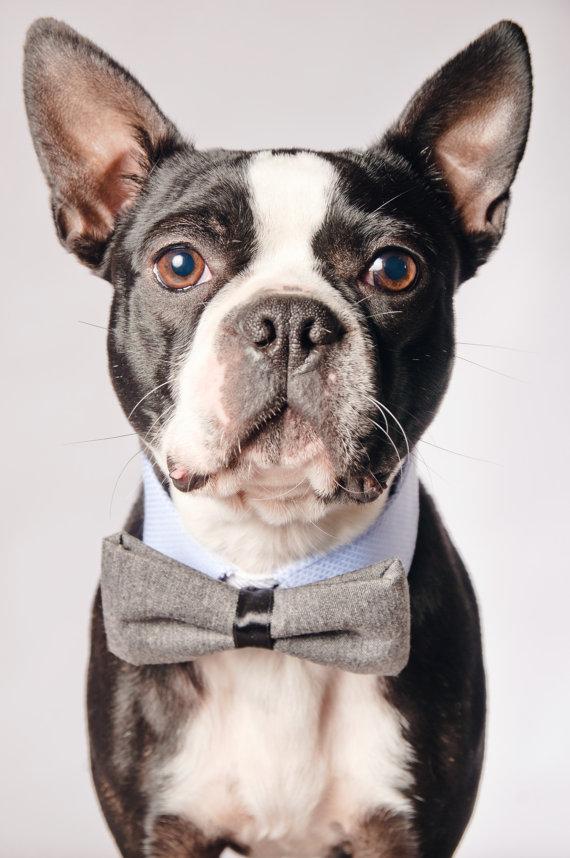 زفاف - Dog Reversible Collar with Dog Bow Tie - Purple and Blue