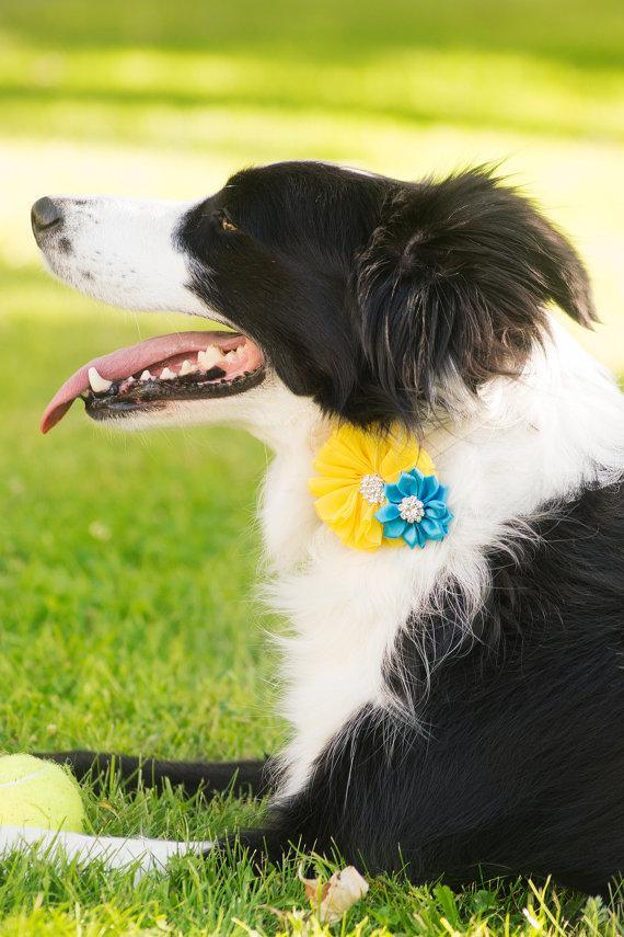Свадьба - Dog collar flowers, Dog collar, dog collar bling, collar Flowers, Wedding Dog Flowers, Bows for Dogs, Dog Bow, Pet flower, dog flower, Cat