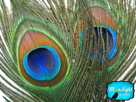 Hochzeit - Large Peacock Eye, 10 Pieces - BIG NATURAL Peacock Tail Eye Feathers : 324