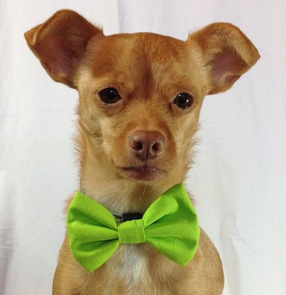Свадьба - Bright Lime Green Pet  Bow Tie
