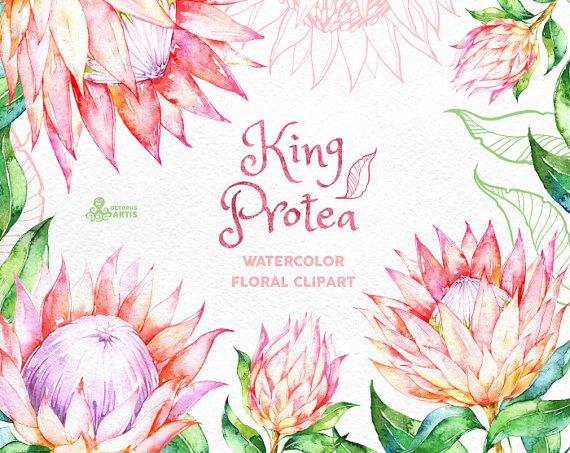 Mariage - King Protea. Watercolor floral Clipart, wedding invitation, floral, tropical bridal, african, greetings, diy clip art, flowers, pink, frame