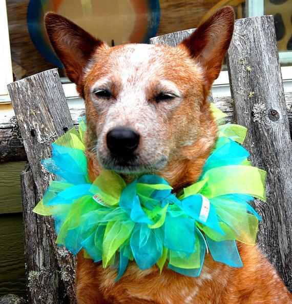 Свадьба - Custom Party Dog Collar, Custom Birthday Dog Collar, Custom Ribbon Dog Collar, Custom Parade Dog Collar, Custom Wedding Dog Collar, Dog TuTu