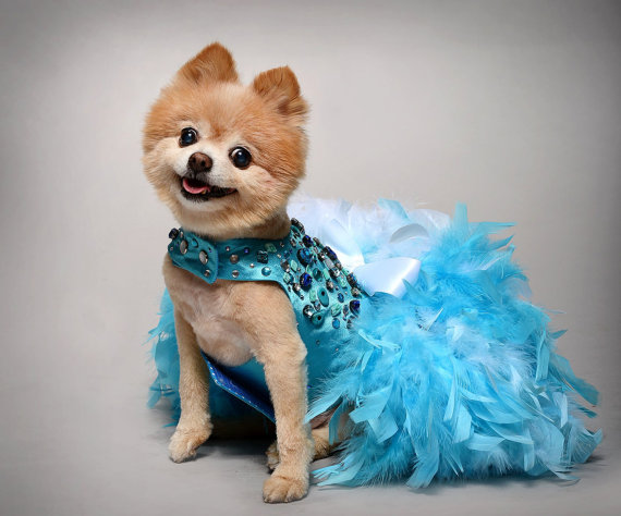 Dog Dress Wedding Turquoise Bling Satin Feather Harness Aqua Blue