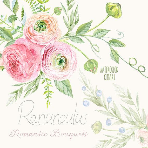 Ranunculus Bouquets Flowers Hand Drawn Clip Art Watercolor ...