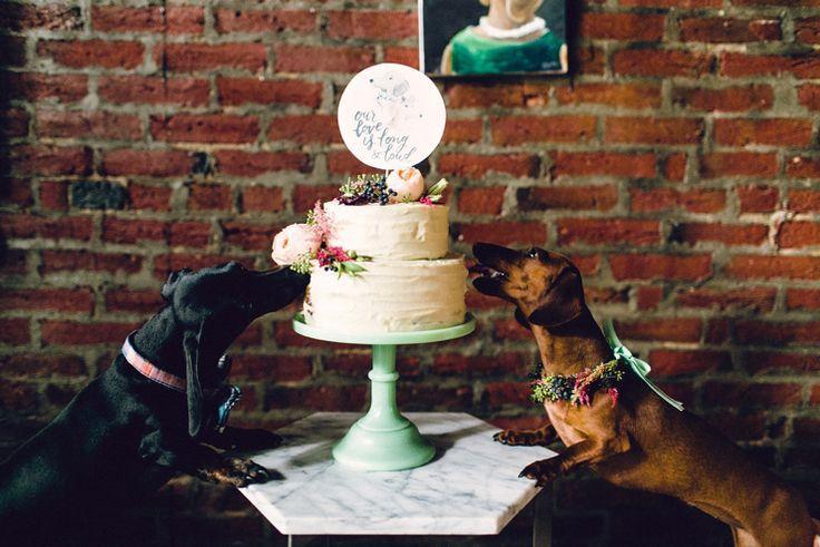 زفاف - Dogs Of Honor