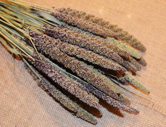 Свадьба - Fresh Cut and Dried Stemmed Decorative Hilander Millet for Dried Florals or Rustic Wedding Bouquets